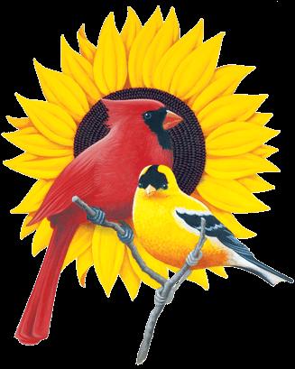 Birds Luv'Em